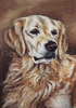 "Postkarte ""Golden Retriever"""