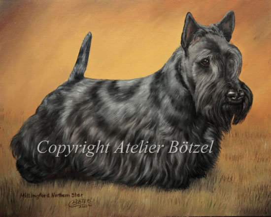 550Scottie_Terrier_Millingford_Nothern_Star.jpg