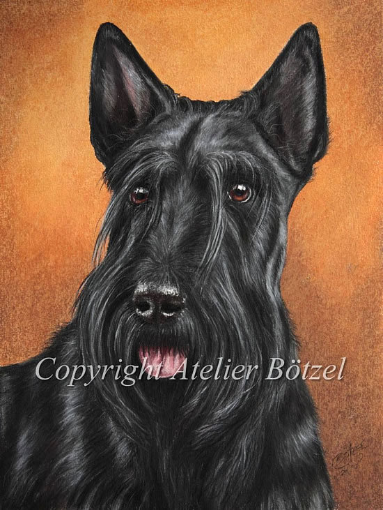 550Scottie_Terrier_Portrait.jpg